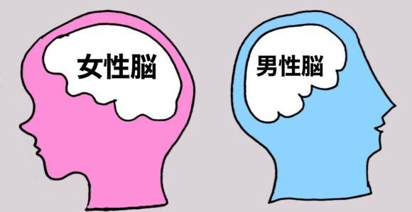 男性脳女性脳